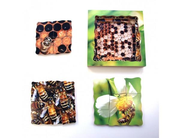 Layered Life Cycle - Bee